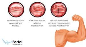 Hipertrofia mięśni