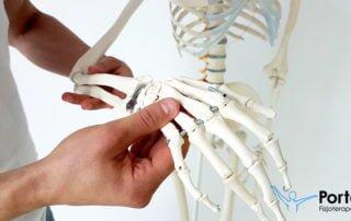 Kości kończyny górnej
