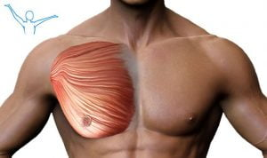 Mięsień piersiowy większy