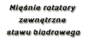 Mięśnie rotatory zewnętrzne stawu biodrowego