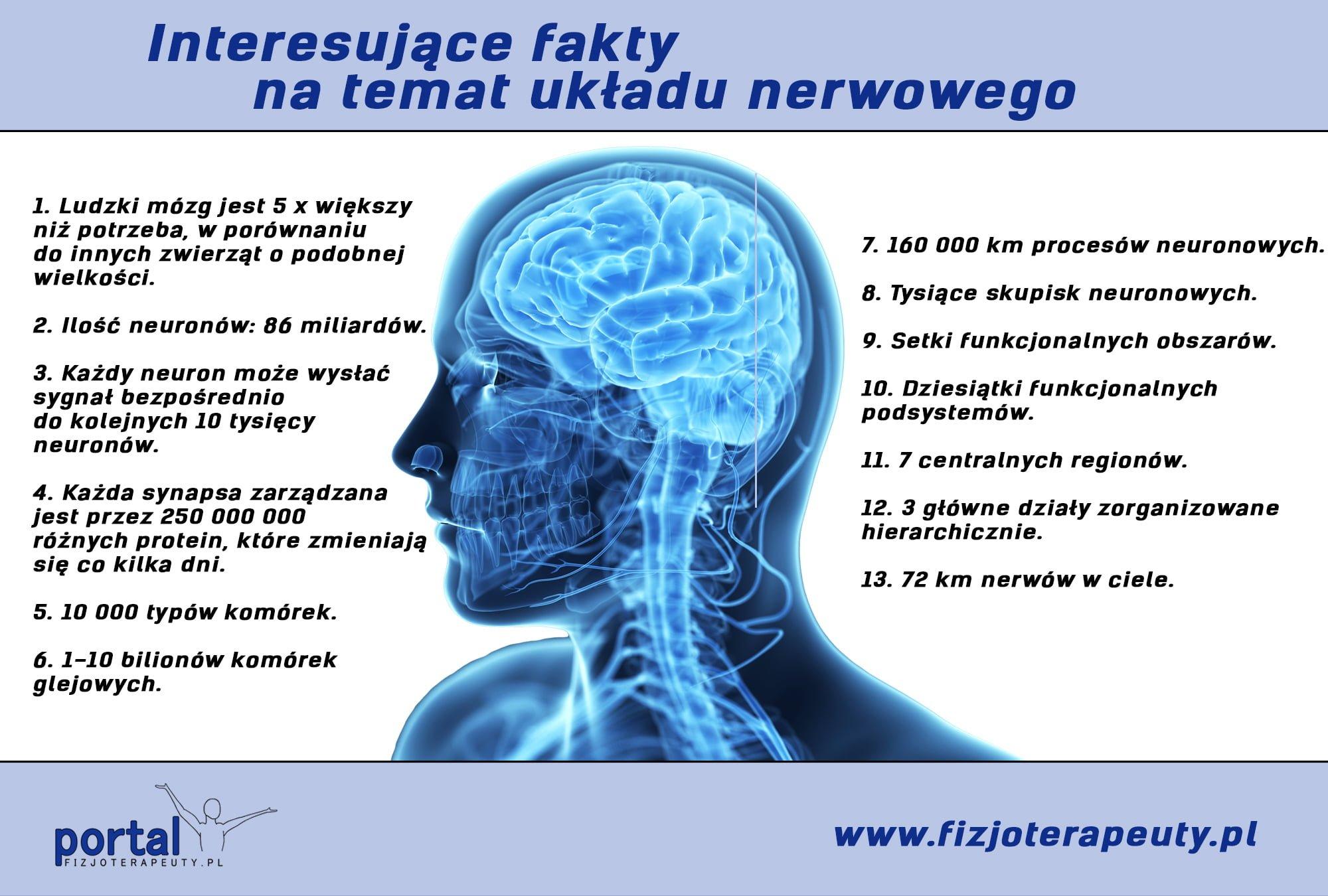 Uklad nerwowy fakty