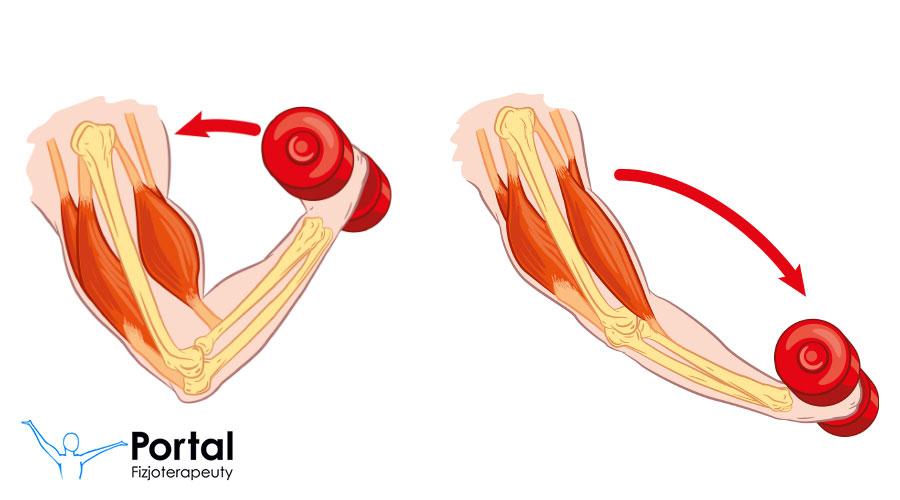 Rodzaje skurczów mięśni