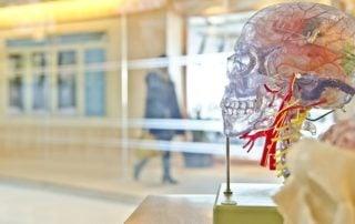 Zasady plastyczności układu nerwowego