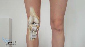 Anatomia kolana
