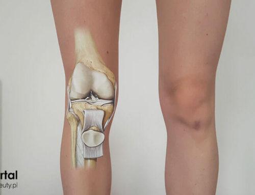 Staw kolanowy – anatomia kolana