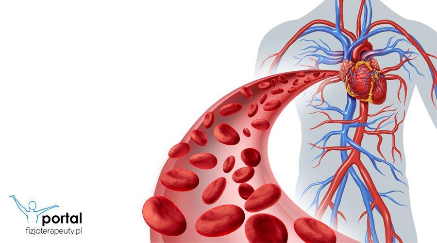 Naczynia krwionośne układu krążenia