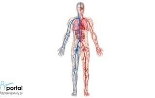 Układ krwionośny - podstawowe informacje