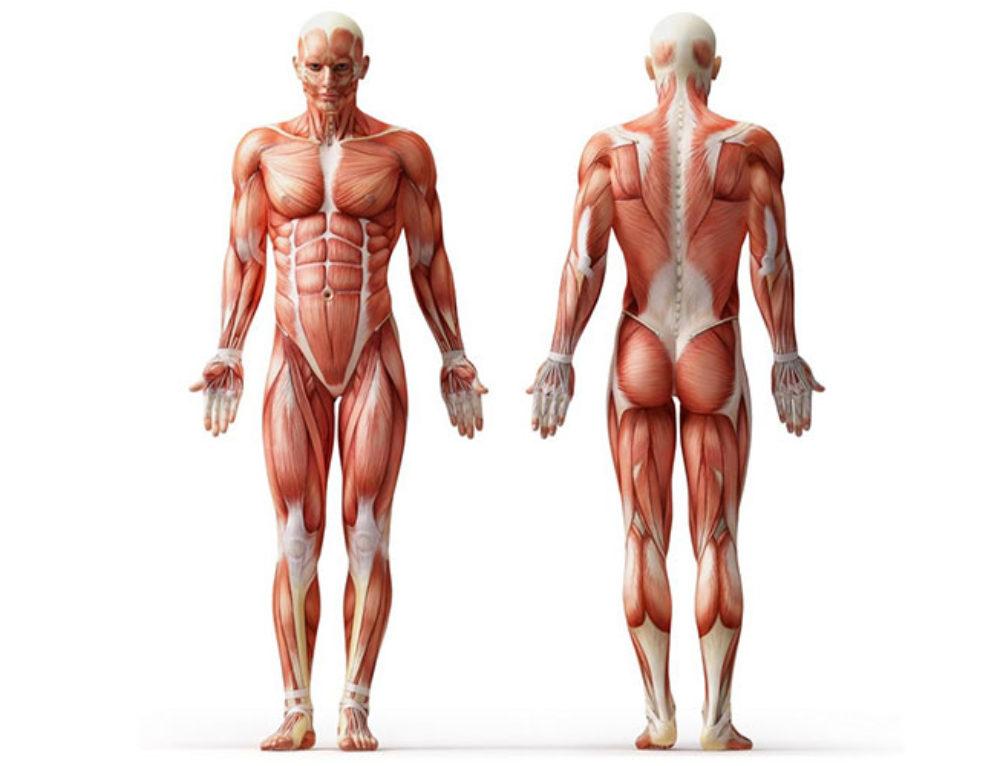 Pozycja anatomiczna – osie, płaszczyzny i ruchy