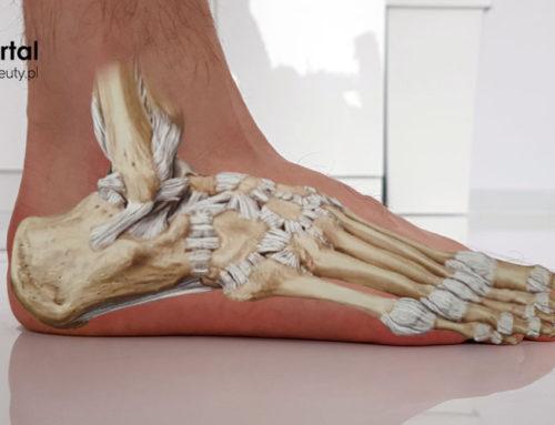 Stopa – stawy, więzadła i mięśnie