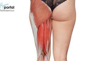 Mięśnie kulszowo-goleniowe