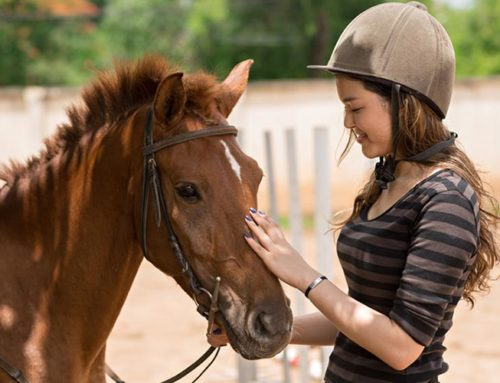 Hipoterapia – fizjoterapia przy udziale konia