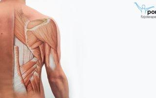 Mięśnie grzbietu - podział i funkcje