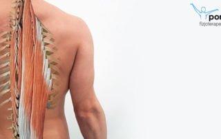Mięśnie posturalne