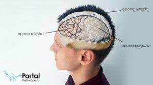 Opony mózgowia