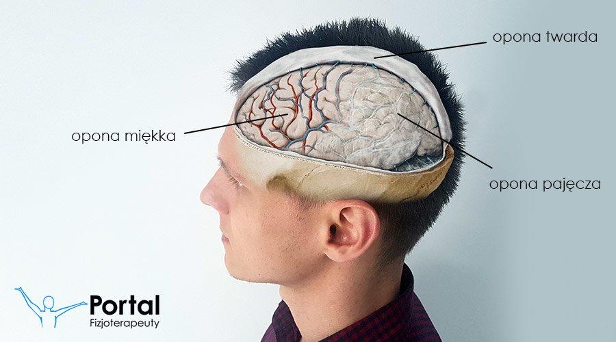 Opony mózgu (opony mózgowe)