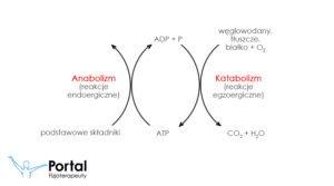 Anabolizm i katabolizm