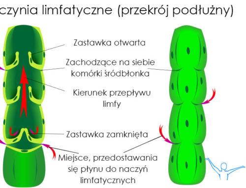 Naczynia limfatyczne
