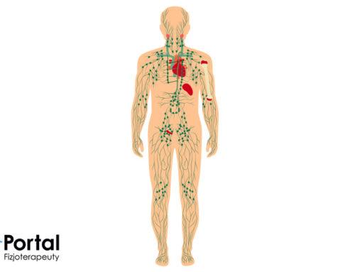 Układ limfatyczny – budowa, funkcje