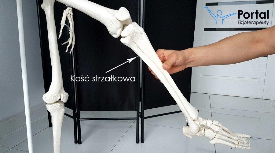 Kość strzałkowa