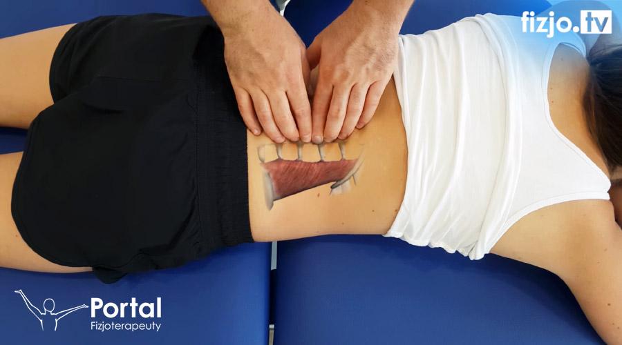 Anatomia palpacyjna
