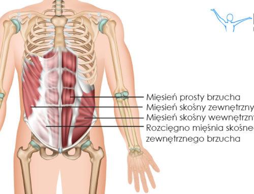 Mięsień skośny wewnętrzny brzucha