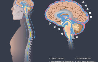 Płyn mózgowo-rdzeniowy