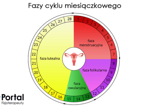 Faza folikularna cyklu miesiączkowego