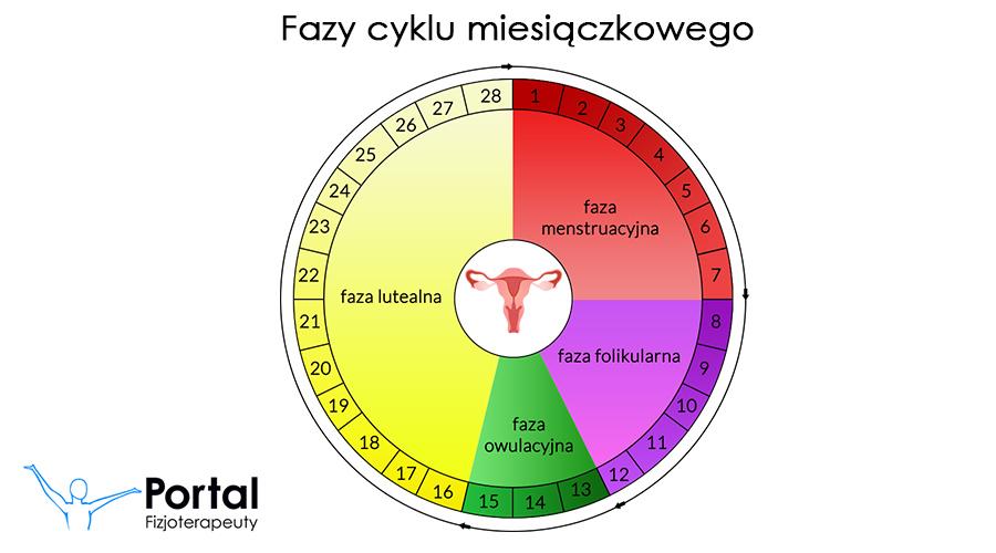Fazy cyklu miesiączkowego