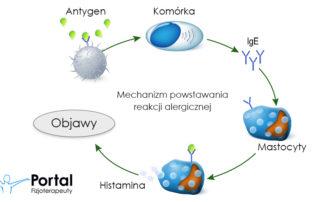 Mechanizm powstawania alergii