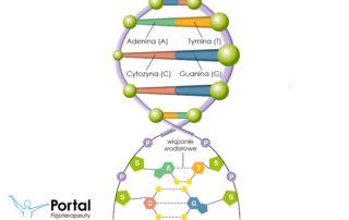 Łancuch DNA (Kwas deoksyrybonukleinowy)
