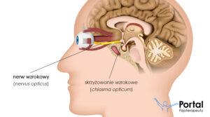 Nerw wzrokowy
