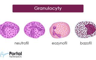 Granulocyty