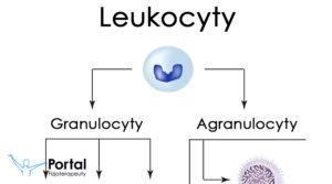 Leukocyty