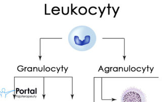 Leukocyty