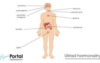 Układ hormonalny