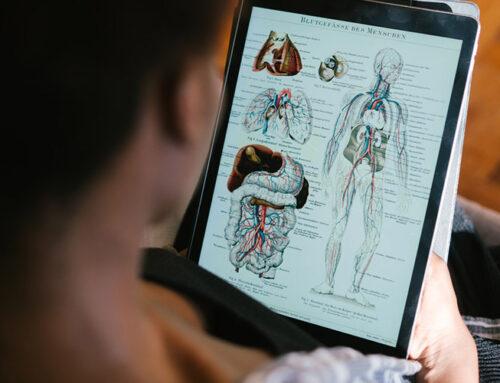 Jak zbudowane jest ciało człowieka?