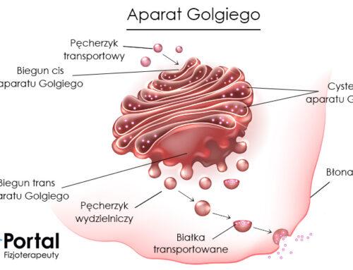 Aparat Golgiego