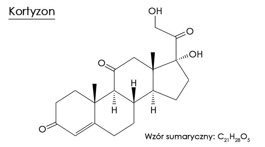 Kortyzon