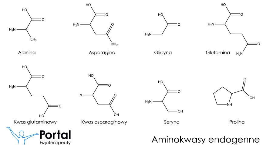 Aminokwasy endogenne