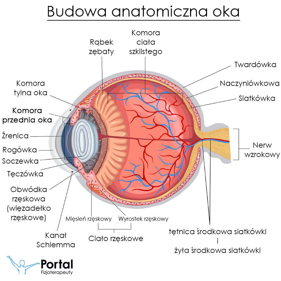 Komora przednia oka