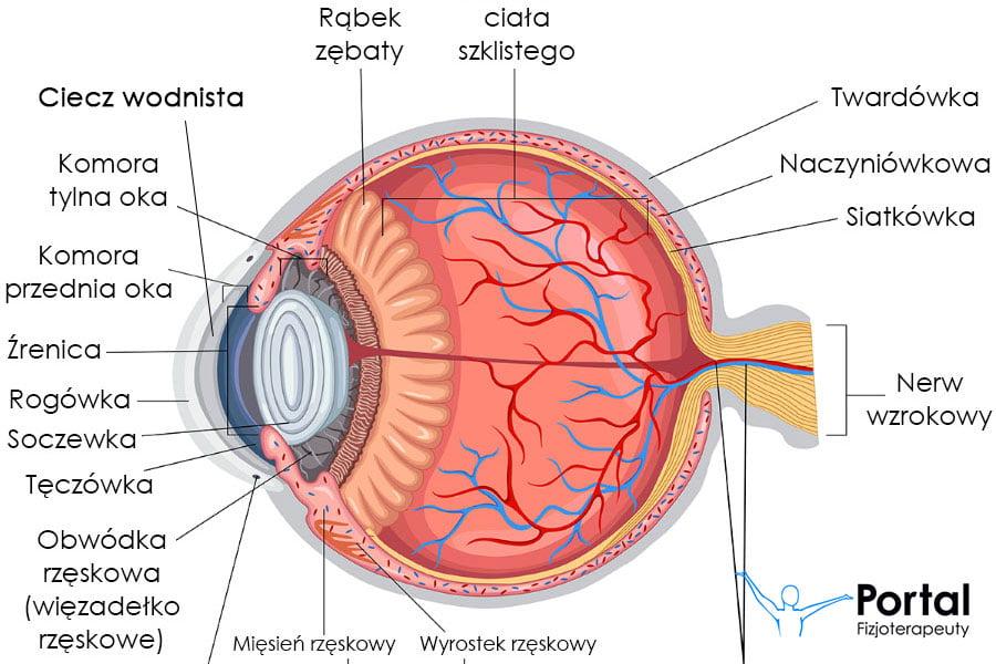 Ciecz wodnista (oko)