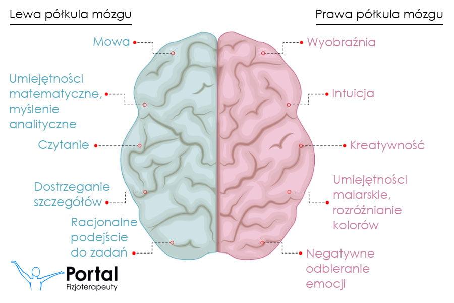 Asymetria funkcjonalna mózgu