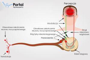 Mechanizm powstawania bólu