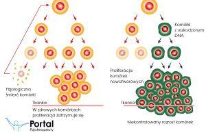 Proliferacja zdrowych komórek i komórek nowotworowych